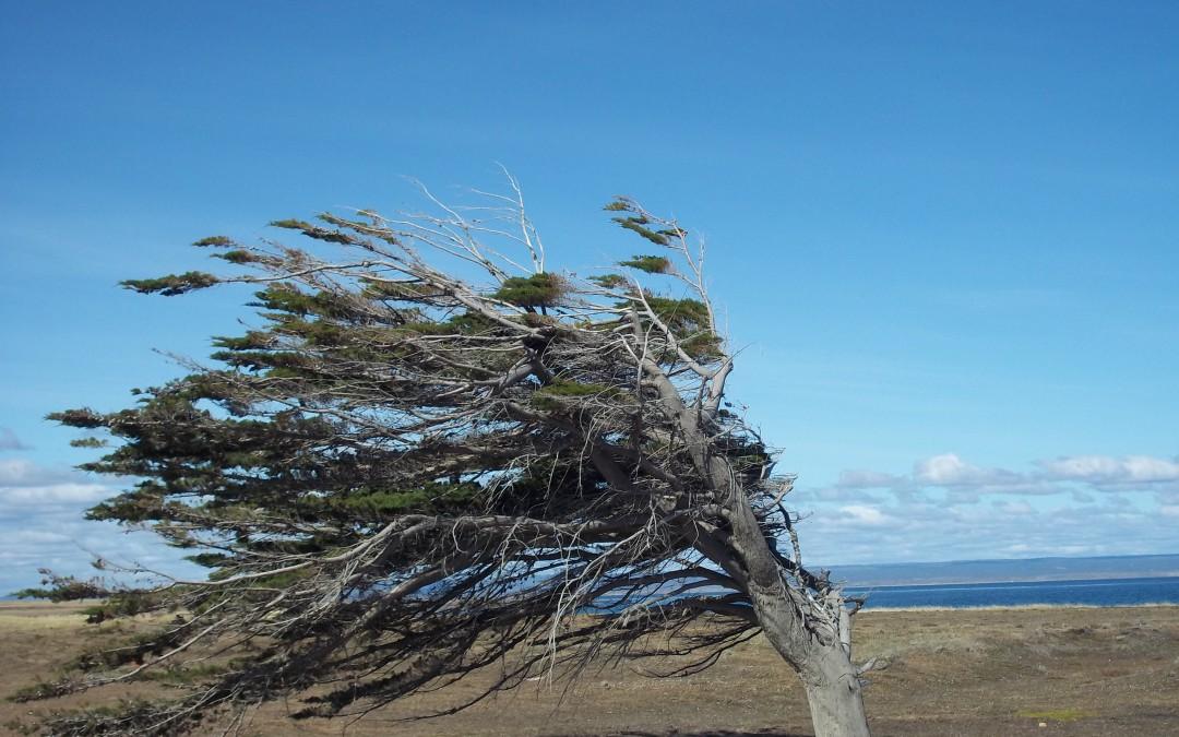Patagonia Recap